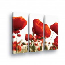 "Phto canva ""Poppy"""