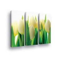 "Photo canva ""Tulips"""